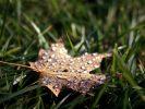 Leave Leaf